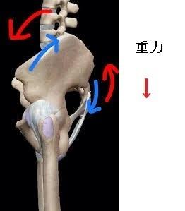骨盤の下方変位 4.jpg